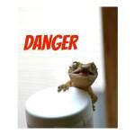 Gecko Nonsense